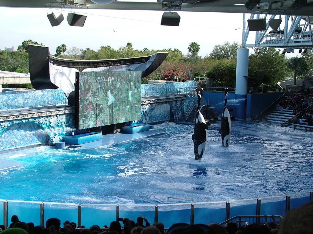 Reisetips for barn i Orlando USA: Killer whale show i Sea World
