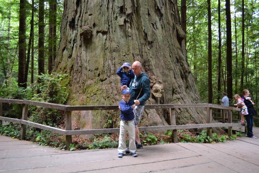 Reisetips for familier, barn og voksne - Redwood er imponerende!